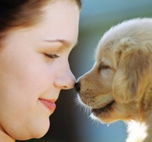 aromatherapy for dog