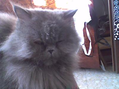 Cat rash
