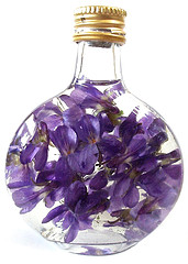 Violets in groundnut oil
