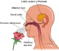 how does aromatherapy work