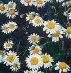 Chamomile Essential Oils