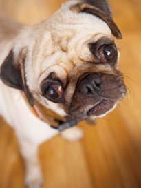 Dog Aromatherapy